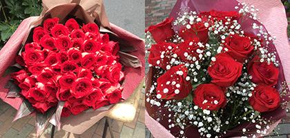 赤バラ(プロポーズ)